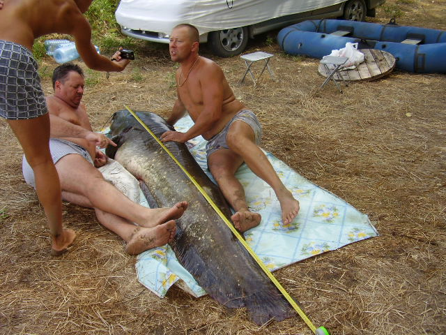 петросян о рыбалке