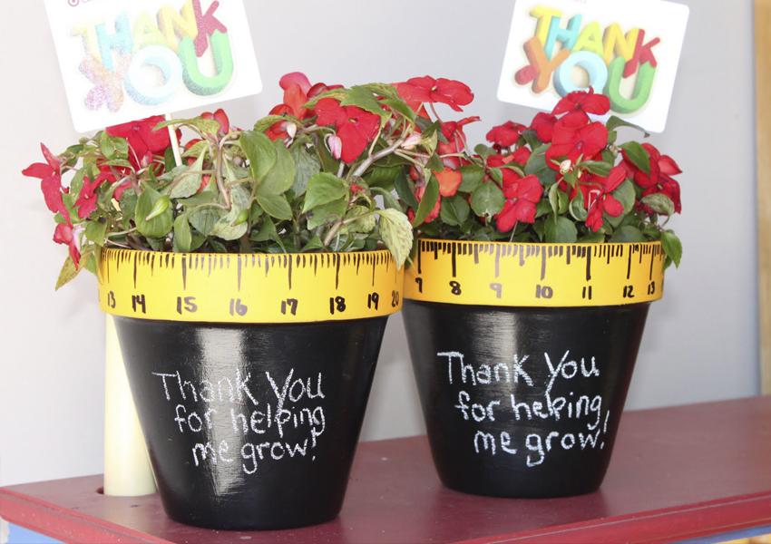 цветы в горшках учителю