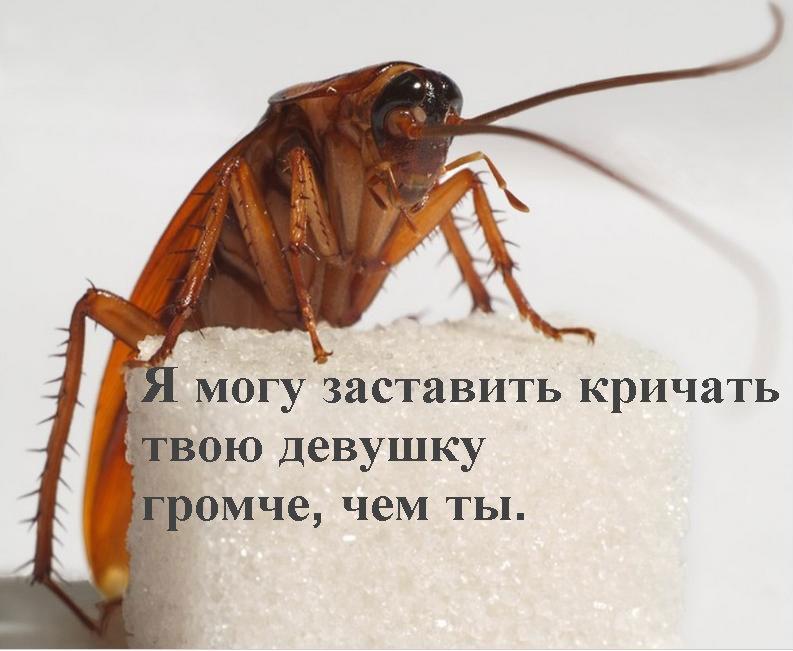 дерзкий таракан